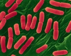 E_coli